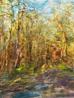 Hiver en forêt de Rosny