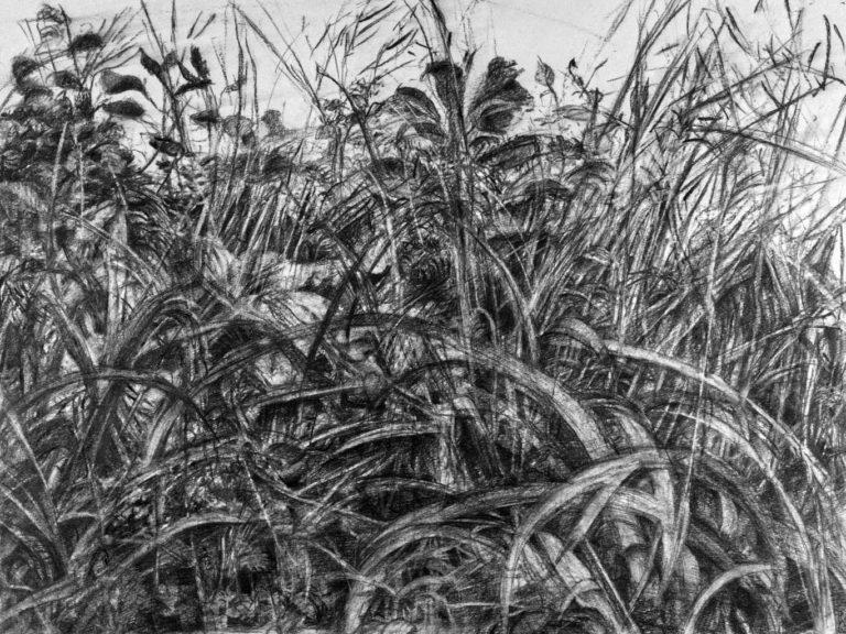 Fusain,crayon graphite, 52x42, mai 2021